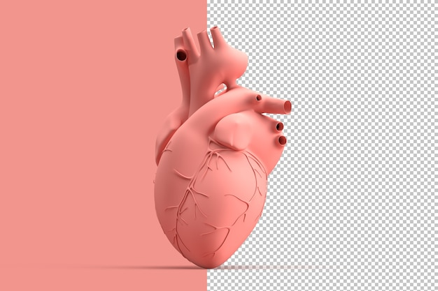 Minimalistic illustration of human heart