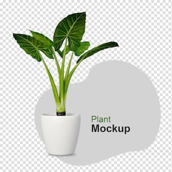 ポット内の3dレンダリングされた植物のモックアップ