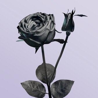 Монотонно цветущая роза иллюстрация на фиолетовом фоне