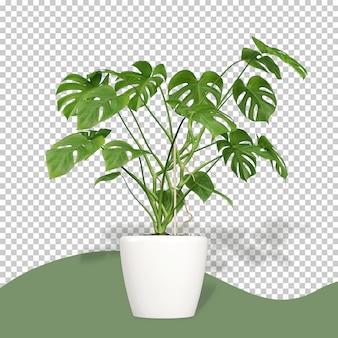 3 dレンダリングで鍋にモンステラ植物
