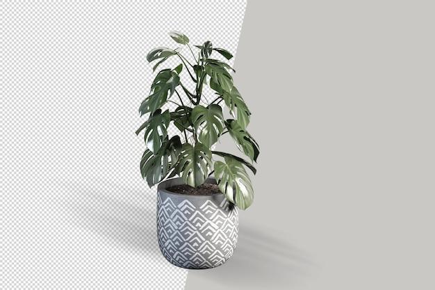 3dレンダリングでポットにモンステラ植物