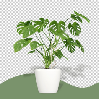 Monstera plant in pot in 3d rendering