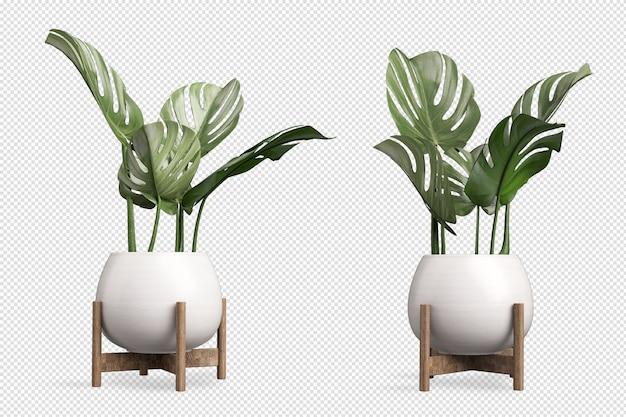 Monstera plant in pot in 3d rendering