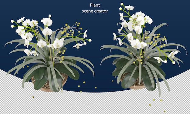 Moth orchid in pot for decoration plant flower rendering isolated