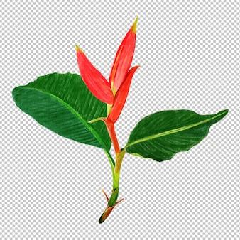 Musella flower watercolor
