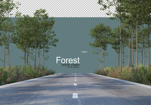 The nature of the forest with various types of trees and shrubs