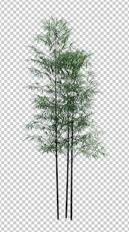 Природа объекта бамбукового дерева на белом