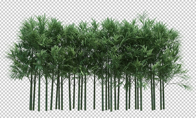 Nature object bamboo tree isolated  white