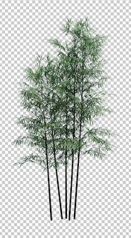 Nature object bamboo  tree isolated white