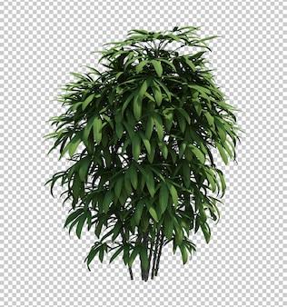 Nature object bush  tree isolated