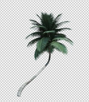 자연 개체 코코넛 나무 절연 화이트