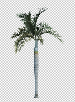 Nature object palm tree isolated white
