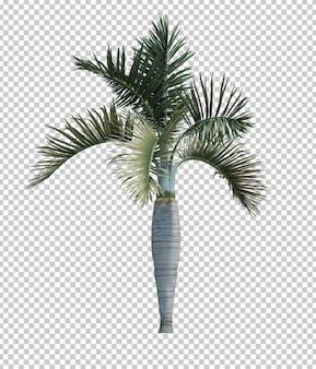 Nature object palm tree isolated