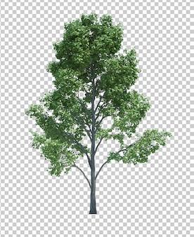白で隔離される自然オブジェクトツリー