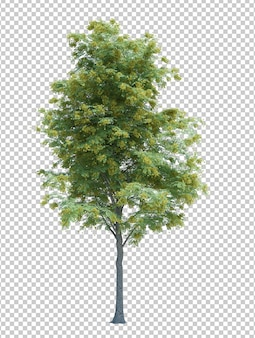 Nature object tree isolated  white  background