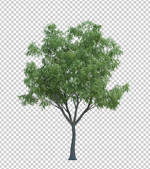 Nature object tree isolated white