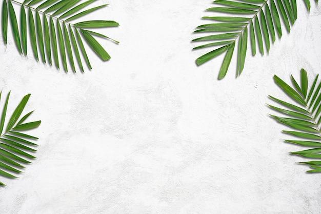 흰색 콘크리트 벽에 야자수 잎의 자연 여름 배경