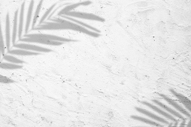 Nature summer background of shadows palm leaves on a white concrete wall