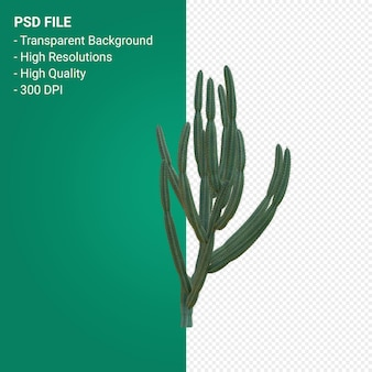 Pachycereus schottii 3d render isolated on transparent background