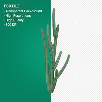 Pachycereus schottii 3d визуализации изолированные