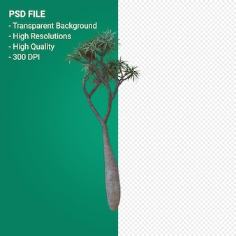 Pachypodium geayi 3d render isolated on transparent background