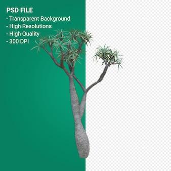 Pachypodium geayi 3d 렌더링 절연