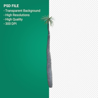 Pachypodium geayi 3d визуализация изолированные