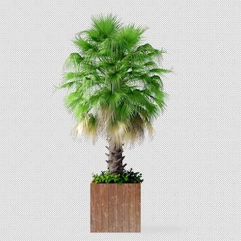 Palm tree in pot in 3d rendering