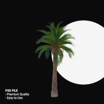 Феникс канарский 3d визуализации изолированные
