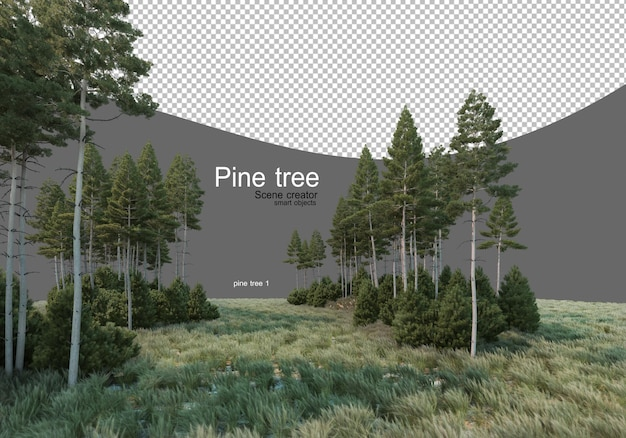 Pine forest in the middle of the field