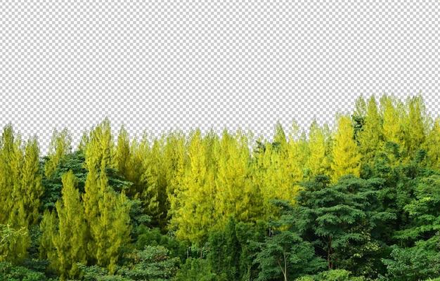 自然psdで隔離の松の木