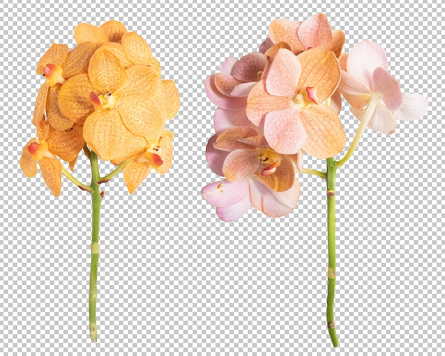 Pink-yellow orchid flower transparency wall. floral object.