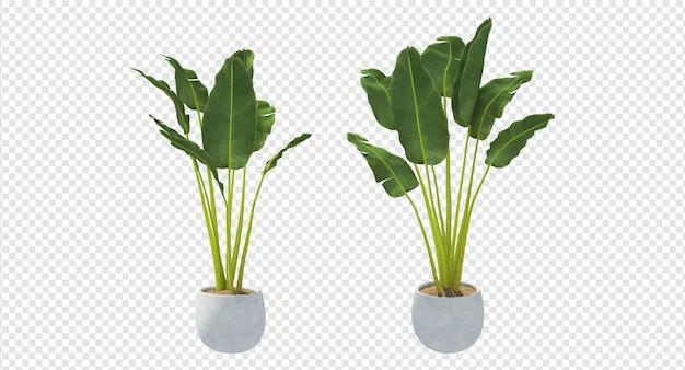 植物3 dレンダリングpsdプレミアム