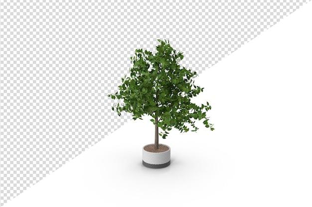 고립 된 식물