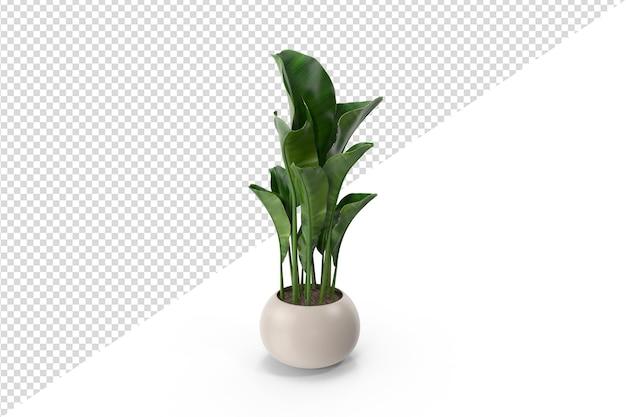 分離された植物