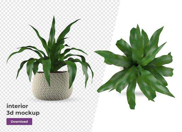 Plant in pot decoration and interior design