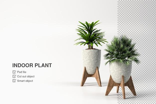 分離されたポットデザインの植物