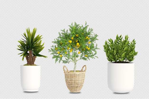 Растения в горшках в 3d визуализации изолированные