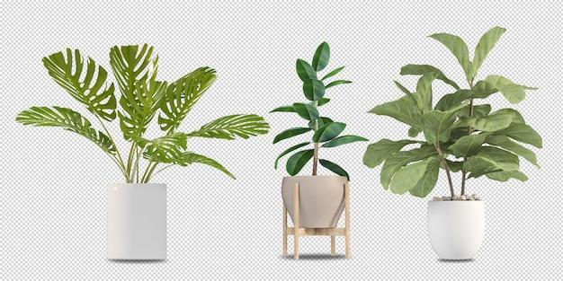 Растения в горшках в 3d-рендеринге изолированные