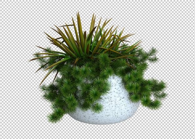 白い鉢の植物