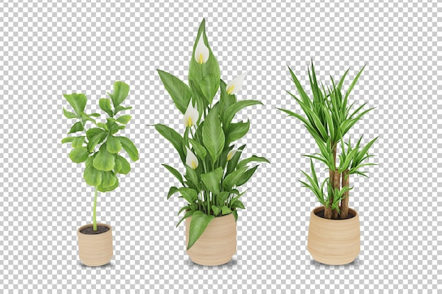 Plants in pots in 3d rendered isolated