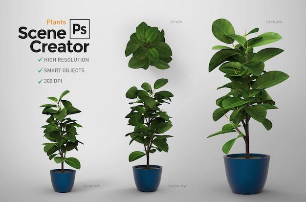 Plants. scene creator. resource.