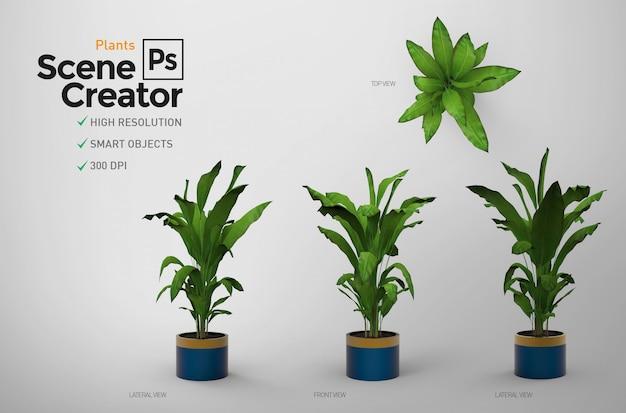 Растения. создатель сцены.
