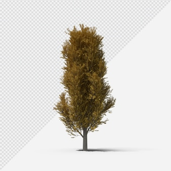 Poplar tree isolated rendering with shadow