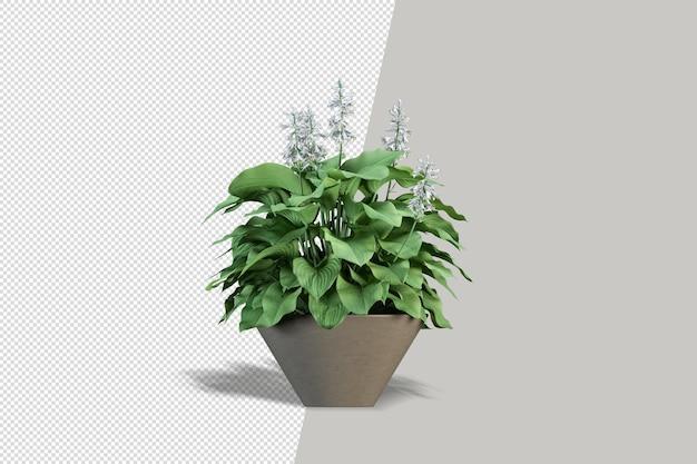 分離された3dレンダリングで鉢植えの花