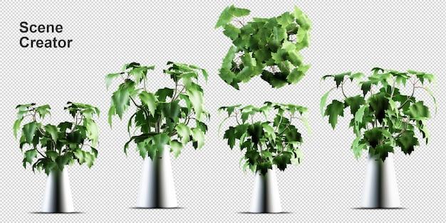 Комнатные растения в 3d-рендеринге изолированные