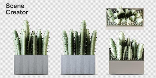 分離された3dレンダリングの鉢植えの植物