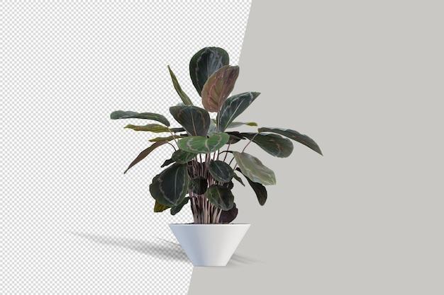 分離された 3 d レンダリングで鉢植えの植物