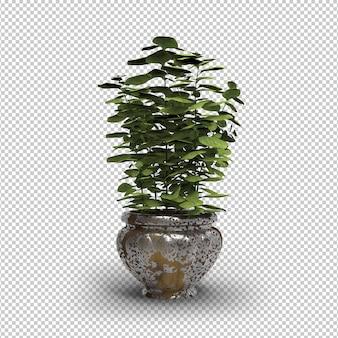 鉢植えの植物が分離されました。モダンなゴールデンフラワーポット。透明な壁。正面図。