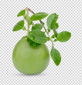Pummelo with leaves isolated